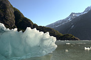 All - Calved Ice Alaska by Tom Wurl