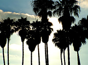 Venice Beach Palms Framed Prints - Caly Palms Framed Print by John Loyd Rushing