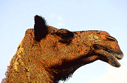 SAHARA Mixed Media - Camel head side view by Anthony Dalton