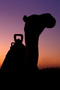 Sahara Photos - Camel silhouette in Dubai by Fototrav Print