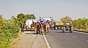 Belongings Posters - Camel Train Tractor and Trucks India Poster by Kantilal Patel