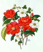 Featured Framed Prints - Camellia Adolf Audusson Framed Print by Ursula Hodgson