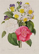 Camellia Posters - Camellias Narcissus and Pansies Poster by Pierre Joseph Redoute