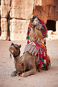 Rugs Prints - Camels in Petra Print by Jane Rix