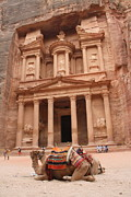 Petra Originals - Camels in Petra by Rebecca Baker