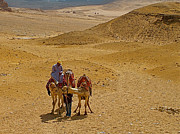 Northern Africa Prints - Camels Nuzzling on the Giza Plateau Print by Ruth Hager