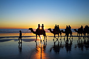 Camels Posters - Camels on the Beach Broome Western Australia Poster by Colin and Linda McKie