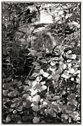 Lying In Wait Metal Prints - Camouflage Metal Print by Keith Woodbury