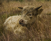 Linsey Williams - Camouflaged Cow