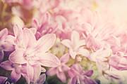 Mythja  Photography - Campanula floral background