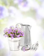 Gardening Tools Posters - Campanula Flowers Poster by Christopher and Amanda Elwell