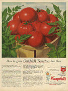 1950Õs Metal Prints - CampbellÕs  1950s Usa Campbells Metal Print by The Advertising Archives