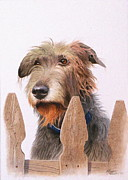 Wolfhound Framed Prints - Can I go with you? Framed Print by C Robert Follett