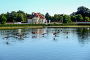 Nymphenburg Prints - Canada Geese at Nymphenburg Palace in Germany Print by Marilyn Burton