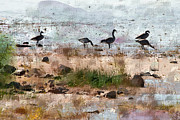 Feeding Birds Prints - Canada Geese at the Lake Print by Betty LaRue