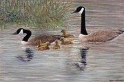 Geese Paintings - Canada Goose Family by Kathleen McDermott