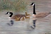 Canada Goose Family Print by Kathleen McDermott
