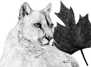 Red Leaf Drawings - Canadian Cougar by Kayleigh Semeniuk