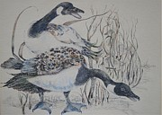 Geese Paintings - Canadian Geese by Dorothy Campbell Therrien