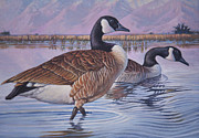 Canadian Geese Paintings - Canadian Geese by Rob Corsetti