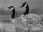 Goose Drawings - Canadian Geese by Tim Dangaran