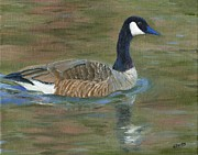 Canadian Geese Paintings - Canadian Goose by Deborah Butts