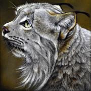 Canadian Lynx Print by Jurek Zamoyski