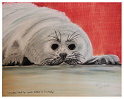 Canada Pastels Framed Prints - Canadian Seal Fur Looks Better On This Baby Framed Print by Bob Timmons
