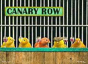 Canary Paintings - Canary Row... by Will Bullas