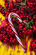 December Prints - Candy cane and berries Print by Garry Gay