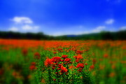 Wildflower Photos Prints - Candyland Print by  Neal Eslinger