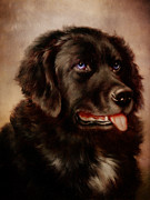 Canines Digital Art - Canine Attachment by Pamela Phelps