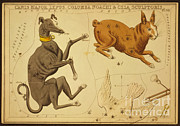 Science Source - Canis Major And Lepus Constellations
