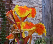 Canna Posters - Canna Lily and Background Poster by Warren Thompson