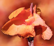 Canna Lily Photos - Canna Lily Orange by Suzanne Schaefer