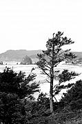 Lanscape Framed Prints - Cannon Beach Framed Print by David Patterson