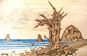 Tree Stump At Ocean Pyrography - Cannon Beach in October by Roger Storey