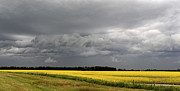 Agronomy Photos - Canola Field Storm Coming, Leduc by Bernard Dupuis