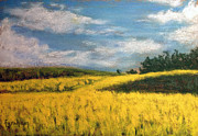 Canola Fields In Rimbey Alberta Print by Fiona Graham