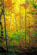 Oak Creek Prints - Canopy of Color III Print by Robert Harmon