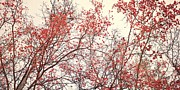Red Leaves Photos - canopy trees II by Priska Wettstein
