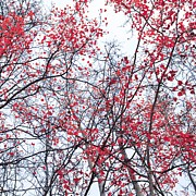 Red Leaf Posters - Canopy Trees Poster by Priska Wettstein