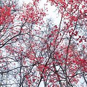Canopy Trees Print by Priska Wettstein