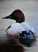 Waterfowl Paintings - Canvasback by Robert Smice