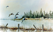 Lynne Parker - Canvasbacks Over Lake...
