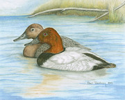 Calm Waters Originals - Canvasbacks by Paul Treadway