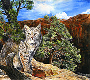 Bobcat Drawings Posters - Canyon Cat Poster by Mark Mahoney