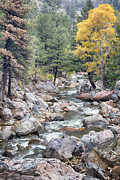 James BO  Insogna - Canyon Creek Touch of Gold