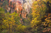 West Fork Oak Creek Canyon Posters - Canyon Kaleidoscope  Poster by Peter Coskun