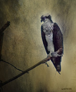 Tree Creature Pyrography Prints - Canyon Lake Osprey II Print by Rhonda Strickland